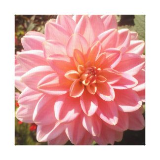 Pretty Pink Dahlia Flower Canvas Print