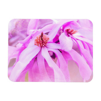 Pretty Pink Flower Blossoms Magnets