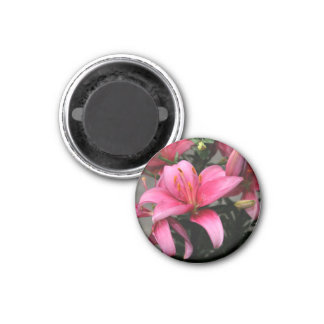 Pretty Pink Flower in Bloom and Buds Refrigerator Magnets
