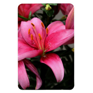 Pretty Pink Flower in Bloom and Buds Flexible Magnet