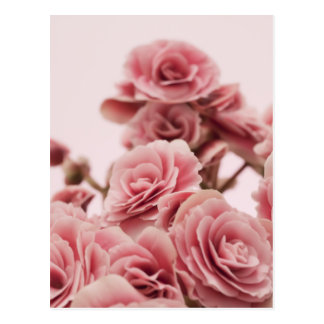 Pretty Pink flowers Postcard