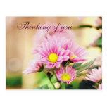 Pretty pink garden flowers postcards