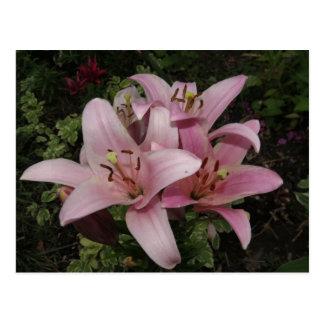 Pretty Pink Lilies Flower Postcard