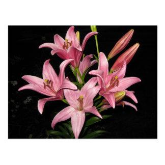 Pretty Pink Lilies Postcard