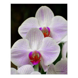 Pretty Pink Orchids Poster