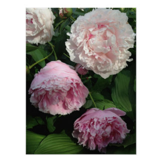 Pretty Pink Peony Art Poster