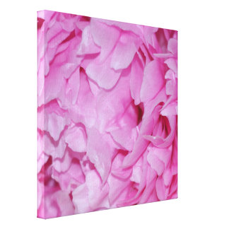 Pretty Pink Peony Flower Canvas Print