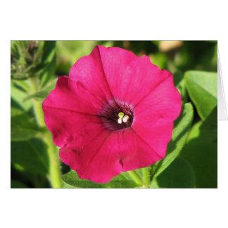Pretty Pink Petunia Card