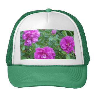 Pretty Pink Rose Flower Bush Cap