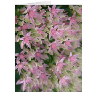 Pretty Pink Tropical Flowers Custom Card