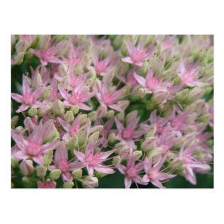 Pretty Pink Tropical Flowers Postcard