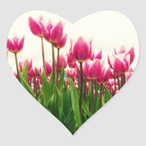 Pretty Pink Tulips - Heart Shaped Floral Sticker