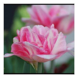 Pretty Pink Tulips Invitation