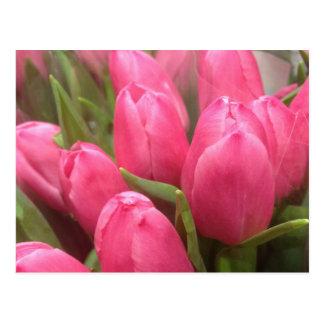 Pretty Pink Tulips Postcards