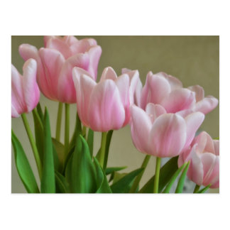 Pretty Pink Tulips Postcard