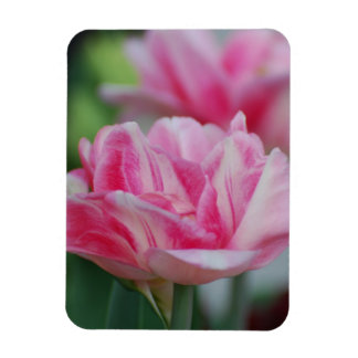 Pretty Pink Tulips Rectangle Magnets