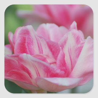Pretty Pink Tulips Sticker