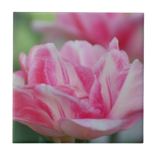 Pretty Pink Tulips Ceramic Tiles