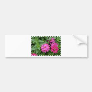 Pretty Pink Zinnia Bumper Sticker