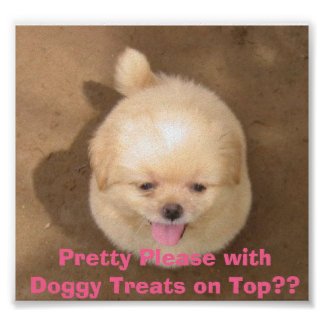 Pretty Please with Doggy Treats on Top?? Poster