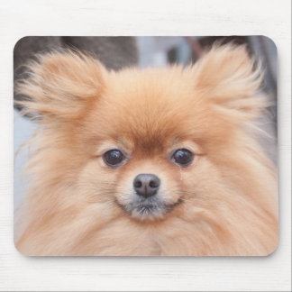 Pretty Pomeranian Mouse Pad