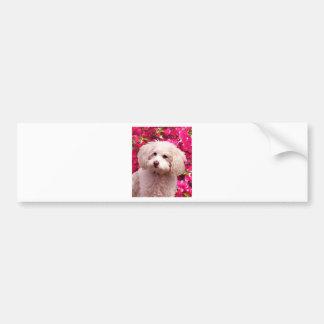 Pretty Poodle Bumper Stickers