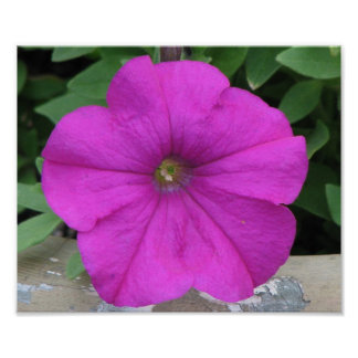 Pretty Purple Flower Poster