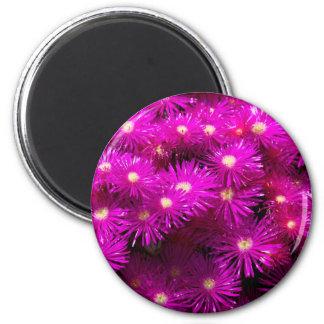 Pretty Purple Flowers in Full Bloom Refrigerator Magnet