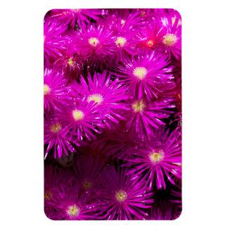 Pretty Purple Flowers in Full Bloom Magnet