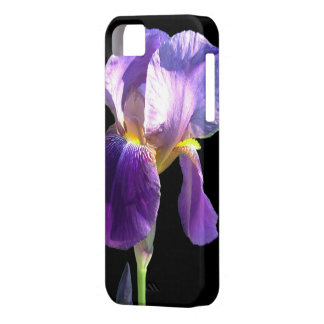 pretty purple iris flower in black background. iPhone 5 covers