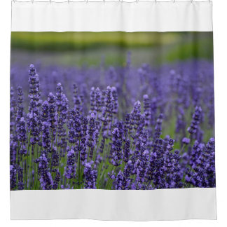 Pretty purple lavendar flowers shower curtain