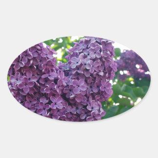 Pretty Purple Lilacs Sticker