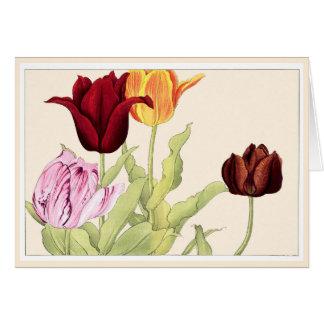 Pretty Red Orange & Pink Tulips Botanical Art Card