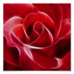 Pretty Red Rose Poster