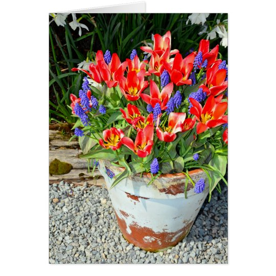 Pretty red spring tulip pot greeting card