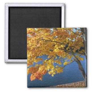Pretty river scene square magnet
