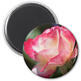 Pretty Rose Fridge Magnet