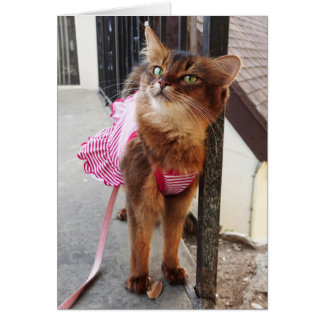 Pretty Somali Cat in Dress for Fall Card