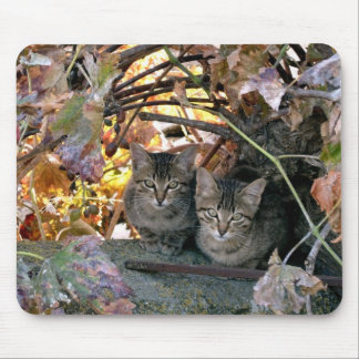 Pretty Spanish Feral Cats Charity Mouse Pad
