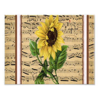 Pretty Sunflower On Vintage Sheet Music Photo Art