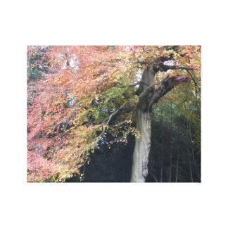 Pretty tree with pink leaves beautiful countryside canvas print