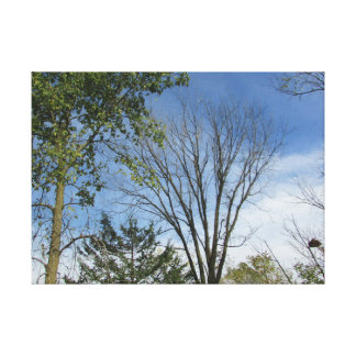 Pretty Treetops against a Sunny Sky Photo Wall Art