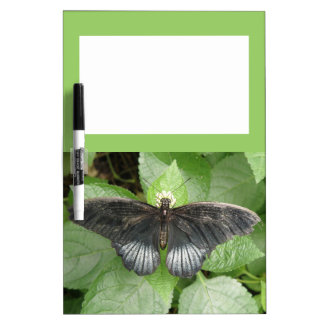 Pretty Tropical Butterfly and Flowers Memo Board