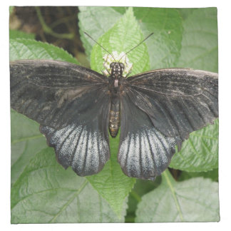 Pretty Tropical Butterfly and Flowers Napkin