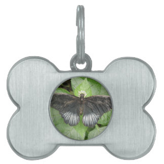 Pretty Tropical Butterfly and Flowers Pet Tag