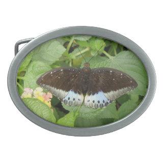 Pretty Tropical Butterfly Belt Buckle