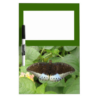 Pretty Tropical Butterfly Memo Board
