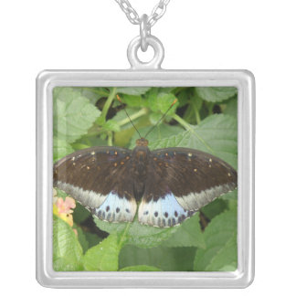 Pretty Tropical Butterfly Necklace
