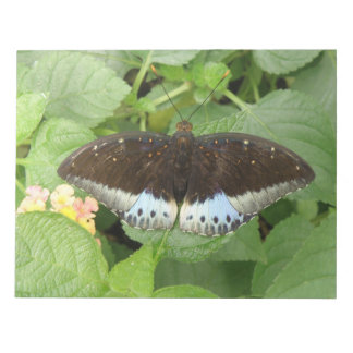Pretty Tropical Butterfly Notepad