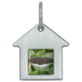 Pretty Tropical Butterfly Pet Tag